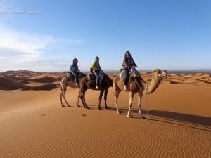 Little Boy, Bud e Cam, nossos camelos por um dia.